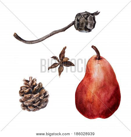 Set of pine and cypress cones with ripe red pear, gifts of nature, hand drawn watercolor botanical illustration isolated on white background. Botanical watercolor illustration on little conifer cones