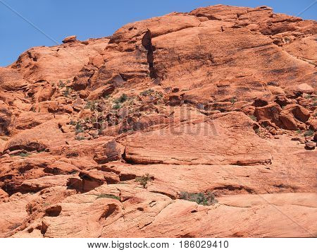 Small scattered green bushes grow on red rock hill in Red Rock Canyon Nevada USA.