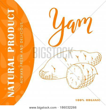 Vector fruit element of yam. Hand drawn icon with lettering. Food illustration for cafe, market, menu design