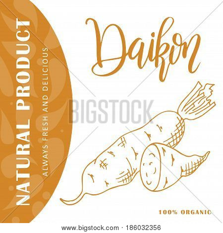 Vector fruit element of daikon. Hand drawn icon with lettering. Food illustration for cafe, market, menu design