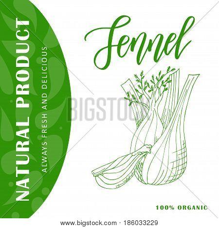 Vegetable food banner. Fennel sketch Organic food poster. Vector illustration