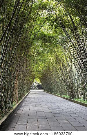 Peaceful bamboo covered walkway through the Wangjianglou Park in Chengdu Sichuan province China