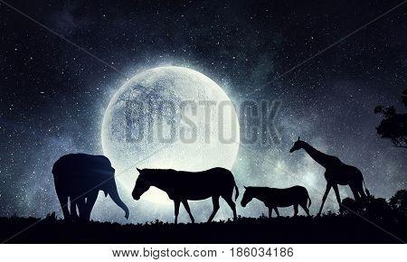 Natural Safari landscape and animals walking