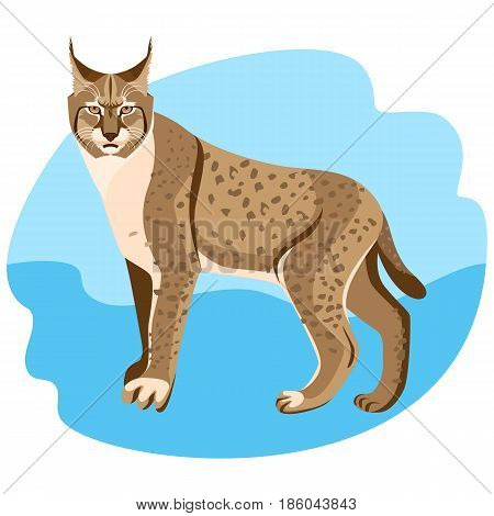 Full length spotted bobcat vector illustration isolated on blue background. Wildlife animal cat specie with coat in brown and white colors