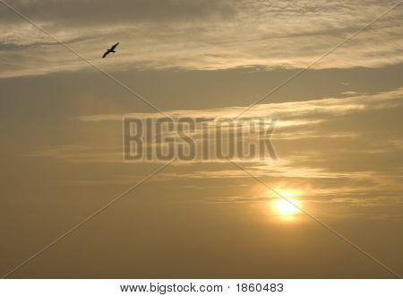 Bird And Sun