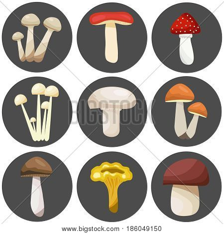 Edible and inedible mushrooms on a dark background. Flat design vector illustration vector.