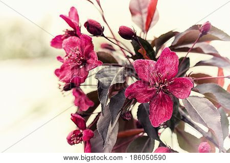 Pink Flowers, Blossom Branch Of The Fruit Tree. Spring Background. Spring Time