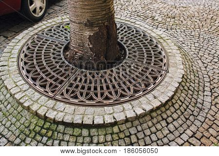 Metallic ring and stone tiles around tree in city. Urban life details concept.
