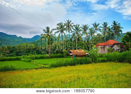 Beautiful Landscape With Fields And Trees In The City Of Amed In Bali.