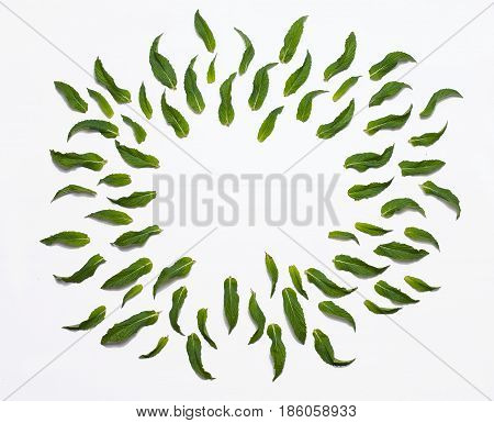 Flowers composition. Frame made of green leaves isolated on white. Flat lay, top view.