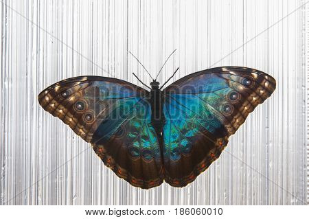 It is image of  beautiful tropical butterfly.