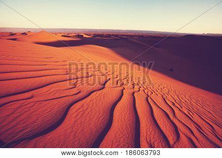 Beautiful sand dunes in desert at sunrise. Death Valley, Nevada, USA.
