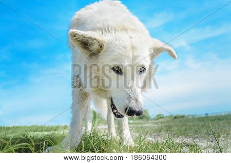 Big dog. Large homeless stray white dog on the river bank