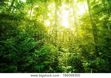 Incredible tropical jungle view with sun flare in morning.