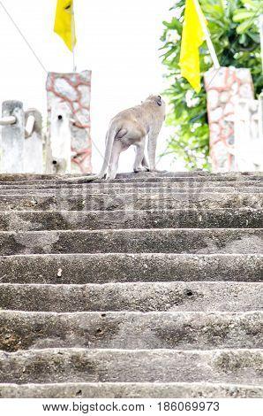 Monkey is walking.Monkey is walking.Monkey is walking.