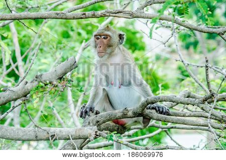 Monkey on the tree.Monkey on the tree.