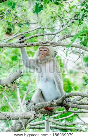 Monkey on the tree.Monkey on the tree.Monkey on the tree.