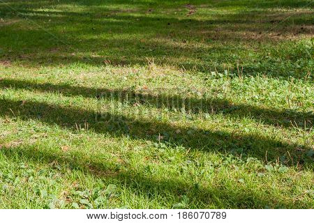 Natural Background Of Green Grass With Stripes Of Sunlight And Shadow.