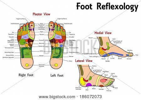 Illustration of a Reflexology Foot Chart Isolated