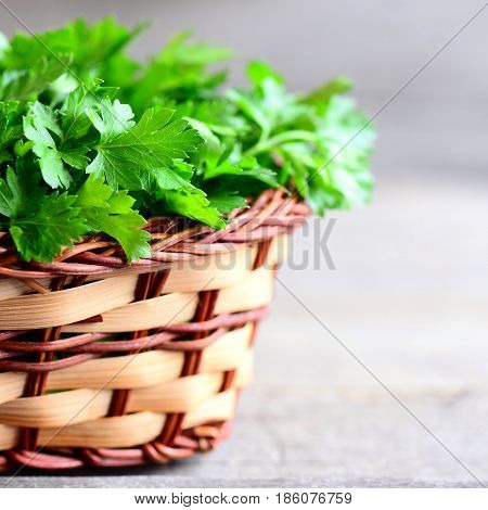 Fresh green parsley leaves in a wicker basket. Garden parsley on wooden table. Plant source with quality antioxidant activities. Rustic style. Closeup
