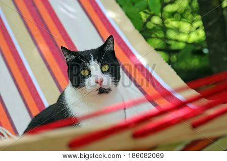 black-and-white cat sitting in a striped haddock