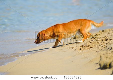 Fearful dog facing the waves of the ocean on the sand at the beach of Malia in Crete