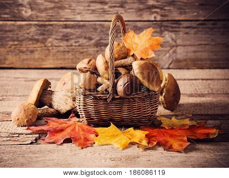 The Mushroom Boletus over a Wooden Background