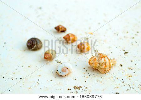 Sea shells and molluscs on the granite slab on shore Livadi beach in sea bay of resort village Bali in may. Bali Rethymno Crete Greece
