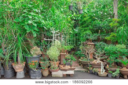 Greenhouse shop of plants and flowers for selling in plant nursery. Potted green plants