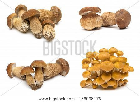Fresh forest mushrooms on a white background. Horizontal photo.