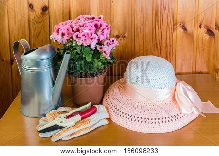 Pelargonia flower in pot watering can and hat on wooden background