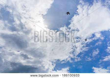 View on beautiful white clouds in a blue sky. Clouds and Skies in the Morning. Flying Birds in the Sky. The Sun behind Clouds. Fresh Air. Cloudy Weather. Cloud Formations. White Clouds