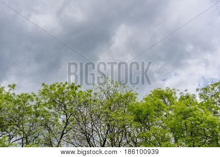 A Row of green Trees in front of dark Clouds. Dramatic Clouds. Thunder Storm, Cloudy Day, Bad Weather,  Fresh Air.  Cloud Formations.