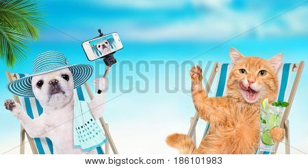 Cat and dog relaxing sitting on deckchair on the sea background.