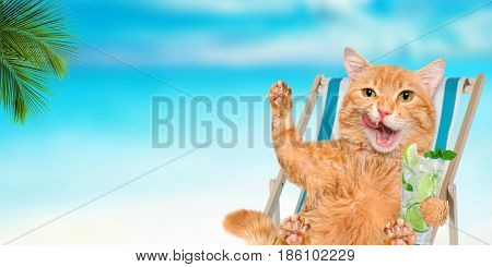 Cat relaxing sitting on deckchair in the sea background.