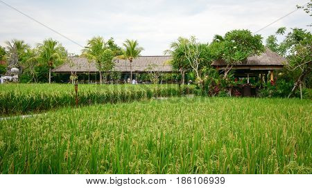 Rural Scenery In Ubud, Bali, Indonesia