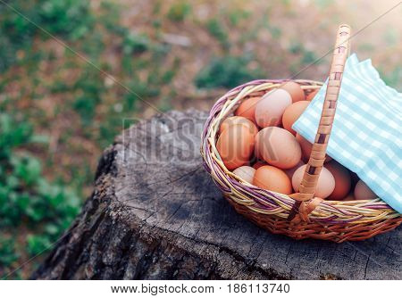 wicker basket full of chicken eggs is on the stump covered by a flap of tissue