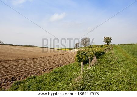 Yorkshire Wolds Potato Rows
