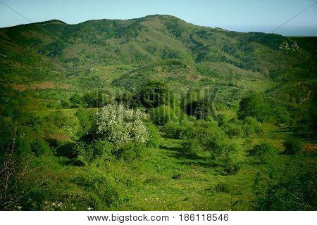 vintage spring landscape of countryside in Nebrodi Park, Sicily