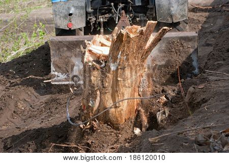 Rupture of an iron cable trying to root out a tree stump.