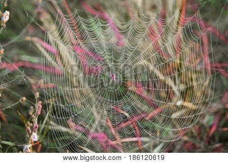 Spider in the web in the morning.