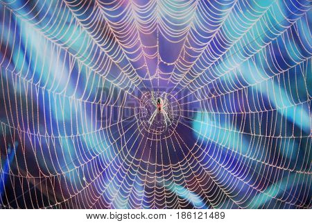 Spider in a web on a colored background.