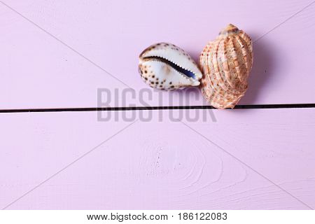 Shells lie on a pink wooden table.