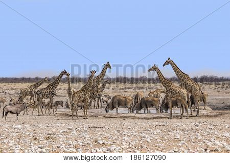 Wild Animals At A Water Hole In Namibia