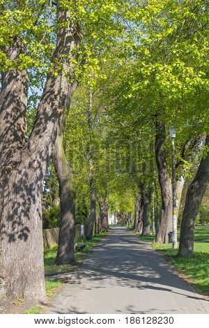 an alley in Schwandorf in bavaria in spring