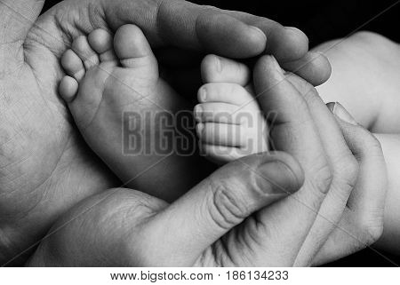 Cute child baby babe little foot in father hands. New born baby foot. Family care parents children love. Baby babe body foot leg. Close up view father hands baby care concept classic black and white
