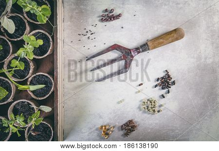 Vegetable Seeds and Plants on Bright Scratchy Background