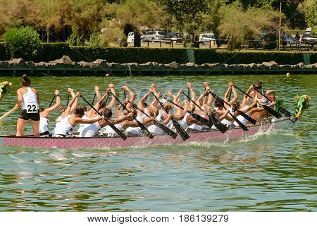 Rome Italy - July 30 2016: Dragon boat crews compete at the european championships held in Italy in 2016 summer in the photo the Hungary crew during the race