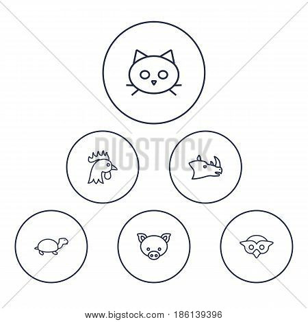 Set Of 6 Alive Outline Icons Set.Collection Of Rhino, Turtle, Pig And Other Elements.