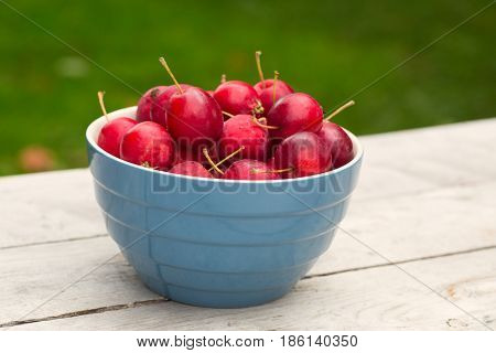 A bowl of crab apples in a back yard setting.